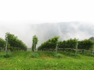 Steiermark 2014_5
